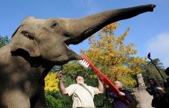 Elephant\u0027s Toothpaste