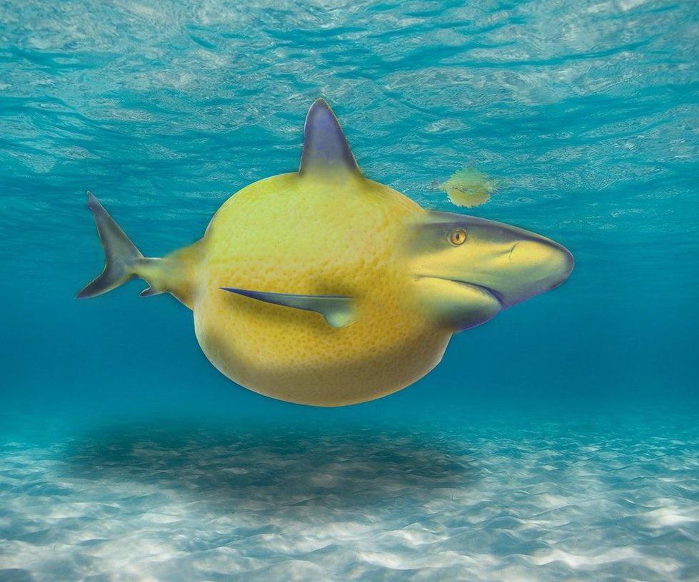 квалификацию картинки лимонная акула дарьи